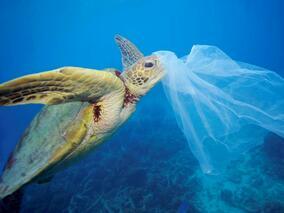 """В Световния ден на океаните """"Грийнпийс"""" и """"За Земята"""" се борят с глобалното замърсяване"""